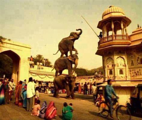 amazing  funny elephants photo