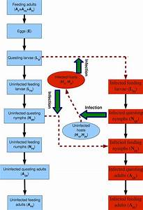 Schematic Diagram For The Lyme Disease Transmission  To Describe The