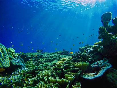 Ocean Important Reasons Oceans Why Future Need