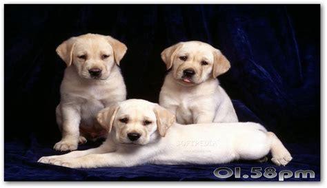 Download Pretty Puppies Free Screensaver 2.0