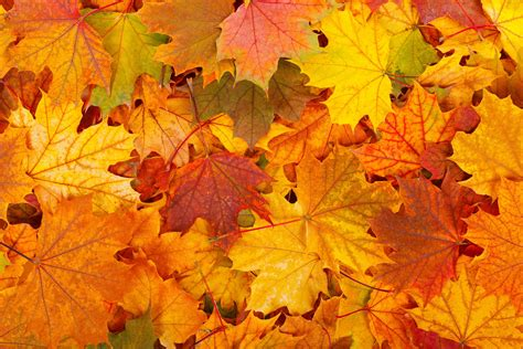 High Resolution Fall Foliage Pictures Free Background Photo Sharing Site