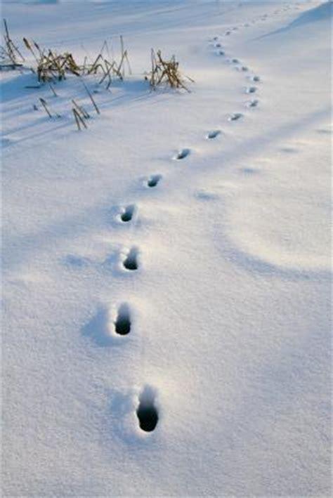 animal tracks  snow lovetoknow