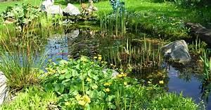 Plantes Vivaces Autour D Un Bassin : plante aquatique pour depolluer l eau ~ Melissatoandfro.com Idées de Décoration