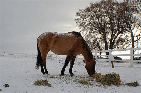 horse cold weather caring tips ihearthorses horses avoid closing barn