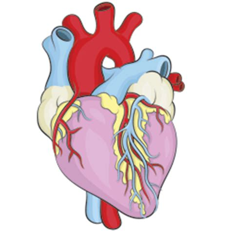 Image result for Cartoon Real Heart