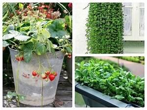 Die Besten Schattenpflanzen Fr Den Balkon Und Garten
