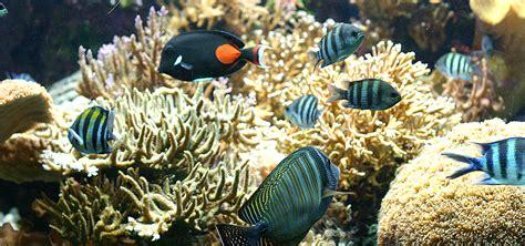 aquarium marin du cap d agde aquarium marin du cap d agde totem info