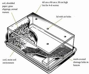 Bin Diagram    Worms  Compost     Animal Care    Caring For