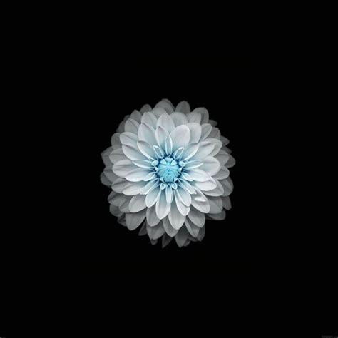 fonds decran fleuris pour iphone  ipad iphone soft