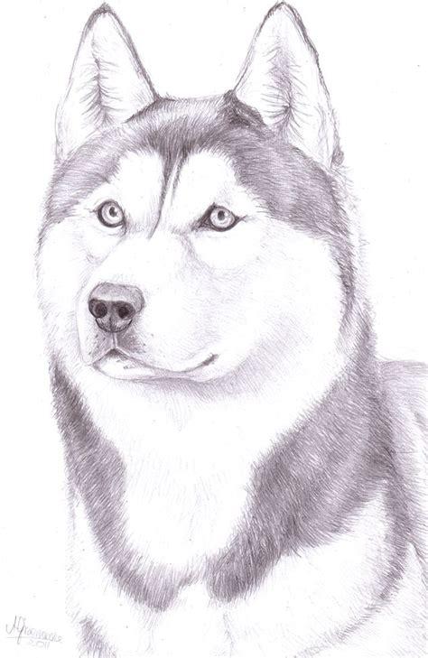 siberian husky puppies  sale  ky  google search