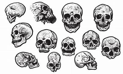 Vector Pack Skull Finley Jeff Skulls Arsenal