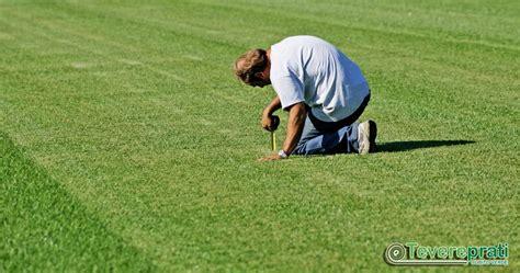 tappeti erbosi a rotoli consulenza tecnica per tappeti erbosi in zolle a roma