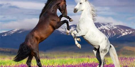 horses windows screen savers