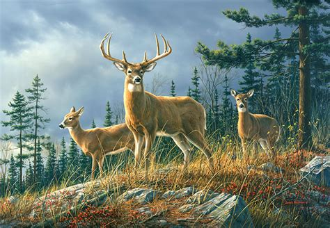 Forest Animal Live Wallpaper - animals in forest