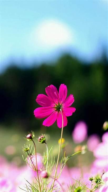 Iphone Floral Backgrounds Flower Girly Spring Pixelstalk