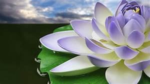 Lotus Flower Wallpapers - Wallpaper Cave