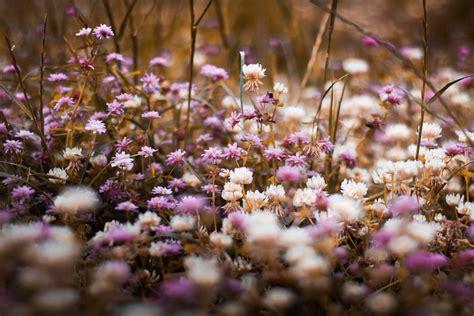 Gambar : musim semi ungu menanam warna lembayung muda