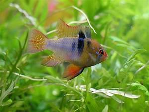 Fische Für Anfänger : aquarium welche fische f r das pflanzenaquarium ~ Orissabook.com Haus und Dekorationen