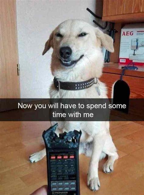 hilarious animal snapchats    start