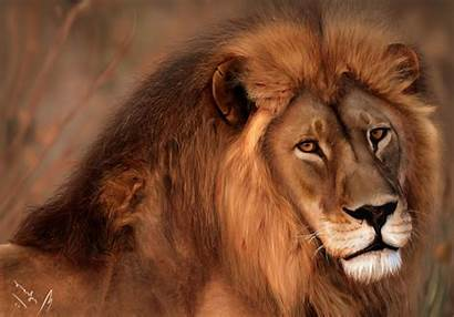 Lions Animals Anime Desktop Samurai Wallpapers Afro