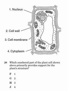 Cell Structure And Function Quiz 2