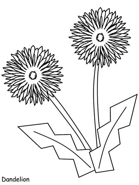 printable dandelion flowers coloring pages coloringpagebookcom