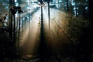 Nature Morning Forest Sunlight Rays Tree Photo Magnificent