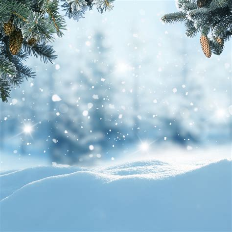 Winter Snowy Background with Pine Branches