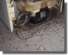 Tuer Les Cafards : le blog de wendy gober les mouches ~ Melissatoandfro.com Idées de Décoration