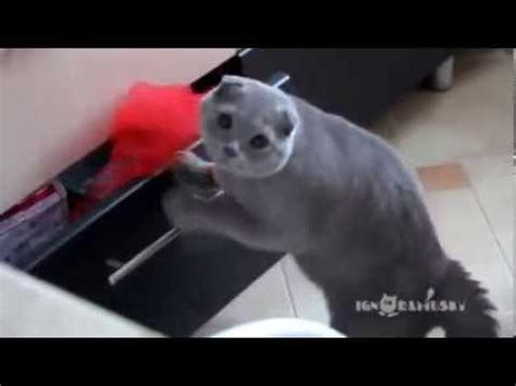 cat caught red handed stealing food   drawer