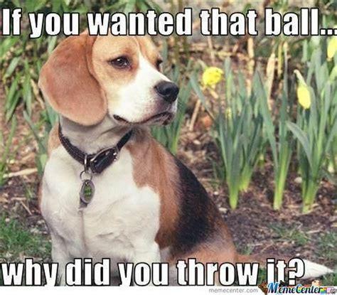 Dog Logic Meme - dog logic by thatguyxlr meme center