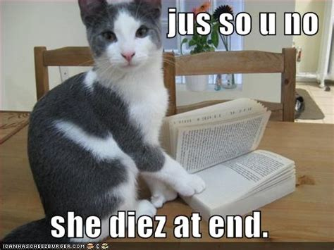 funny image gallery lol cats captions funny pictures