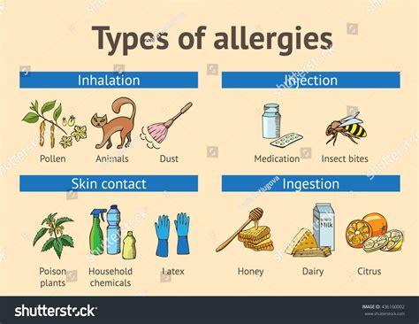 Types Allergies Scheme Color Stock Vector 436160002