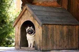 Hundehütte Größe Berechnen : hundeh tte bauanleitung ~ Themetempest.com Abrechnung