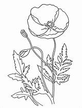 Poppy Coloring Pages Flower Poppies Remembrance Printable Flowers Colouring Anzac Template Print California Simple Drawing Sheets Templates Many Activities Drawings sketch template