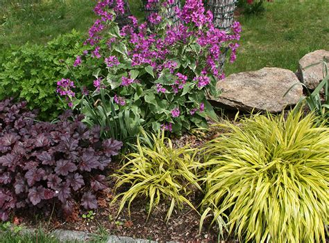 best shade perennials zone 5 top 28 best shade perennials zone 5 partial shade plants zone 5 first home dreams zone 5