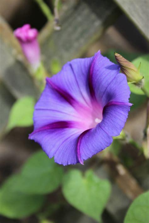 garden zeens  roger