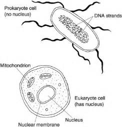 prokaryote answers coloring pages