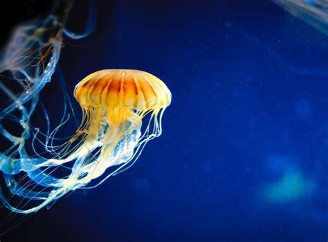 Ven en medusas, corales y parásitos marinos potenciales ...