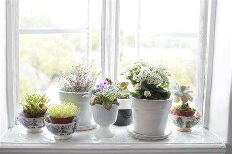 Fensterbank Deko Mit Pflanzen, Die Einen Kleinen Garten
