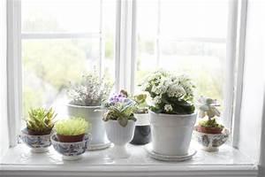 Blumen Für Fensterbank : fensterbank deko mit pflanzen die einen kleinen garten erschaffen ~ Markanthonyermac.com Haus und Dekorationen