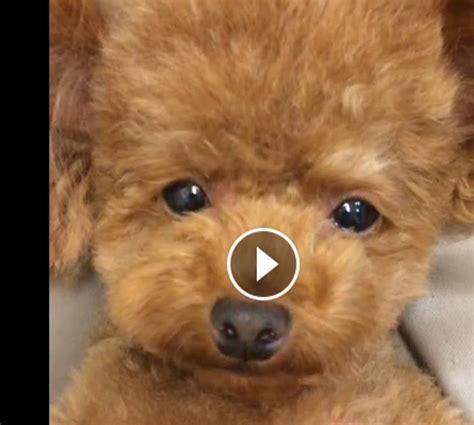 femme a la cuisine vidéo craquante ce petit chien est trop mignon femmes d