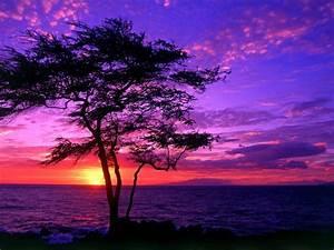 Beautiful, Scenery, Tree, Sea, Sunset, Hd, Wallpaper, 3842, Wallpapers13, Com
