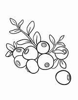 Coloring Printable Blueberry Coloringcafe Fruits Coloriage Berry Kaynak sketch template