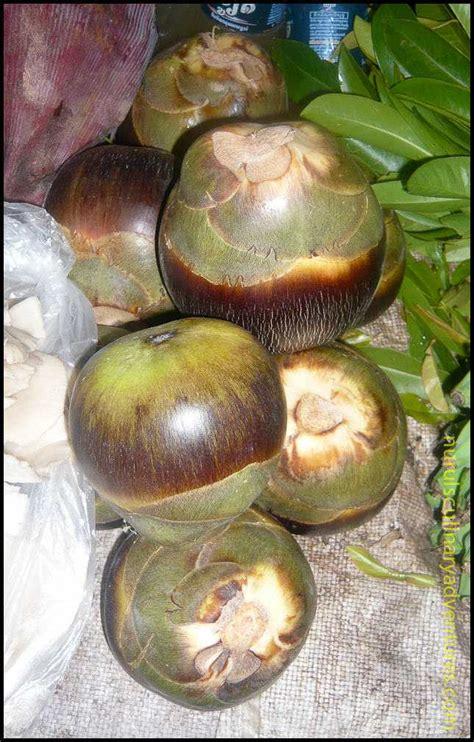 Borassus Flabellifer; Palmyra Palm Tree Fruit Nurul's