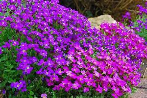 Arbuste Plein Soleil Longue Floraison : fleurs vivaces longue floraison ou acheter plantes pas ~ Premium-room.com Idées de Décoration