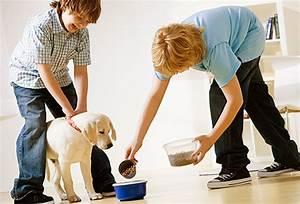 slideshow feeding your dog