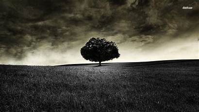 Dark Sky Wallpapers Tree Lonely Cloudy Backgrounds