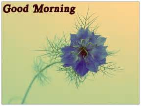 simple morning cards morning wishes pics festival chaska