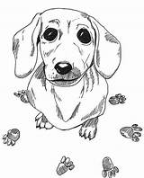 Dachshund Coloring Pages Dog Printable Sausage Drawing Adult Wiener Colouring Animal Dogs Sheets Drawings Puppy Heaven Adults Worksheets Books Weiner sketch template